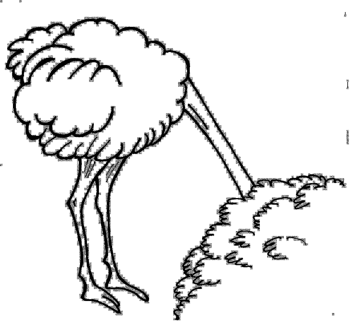 struds